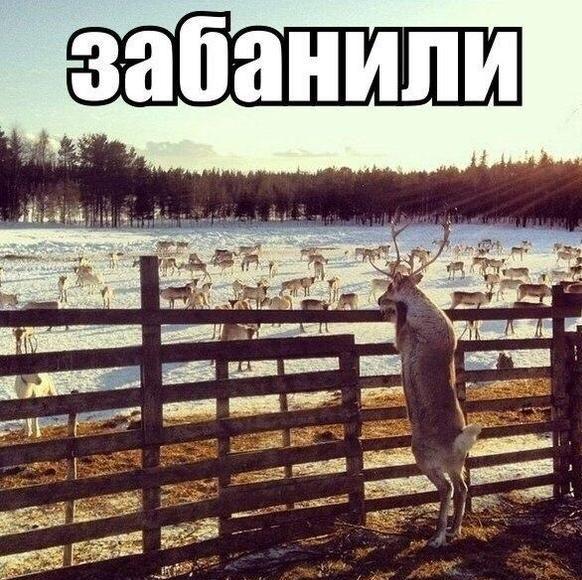 1414660583_prikoly-38