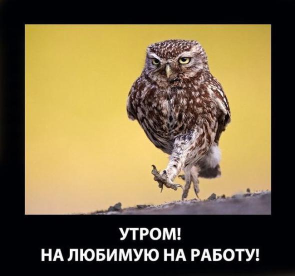 humor_33