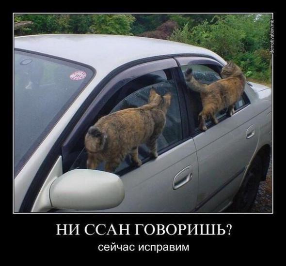 humor_05_06_47