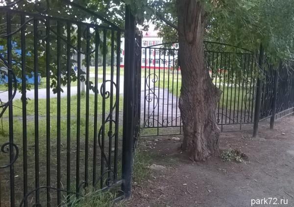 Забор у школы 43 установили так, чтобы сберечь дерево