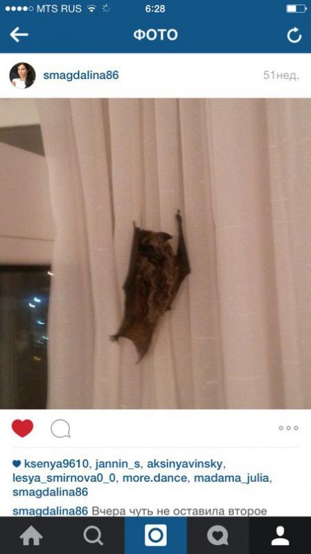 Летучая мышь... Просто залетела в окно. Дело было прошлым летом. Фото в ВК опубликовала тюменка Светлана Павлова