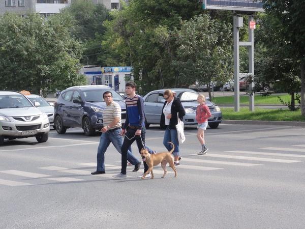 Пес дорогу знает_новый размер