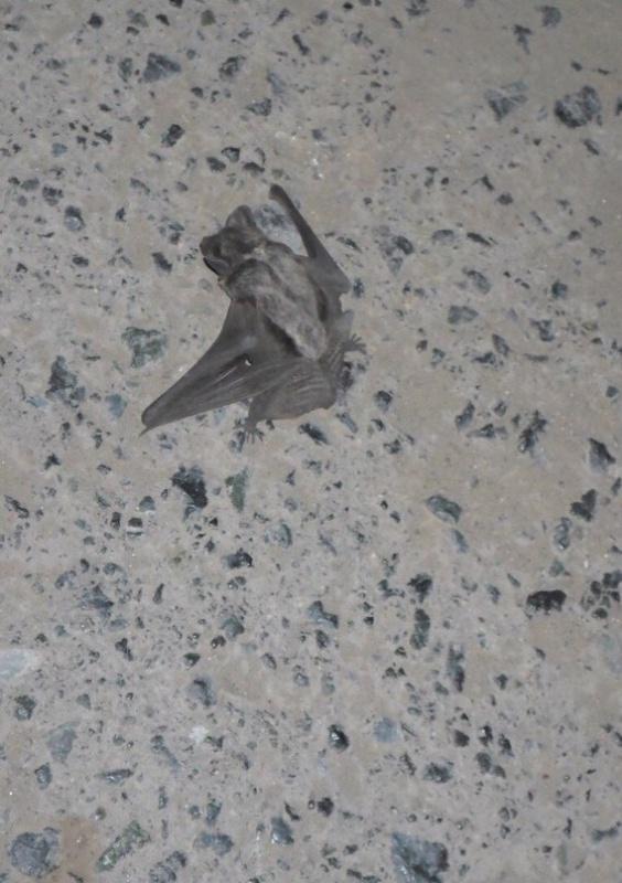 На улице видели - тоже... упала под ноги... на ул. Немцова. Фото Инны Шнайдер из соцсети ВК