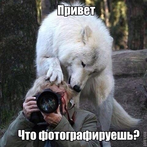 humor_210201525