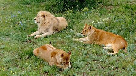 Ландшафтный зоопарк «Парк львов», Белогорск