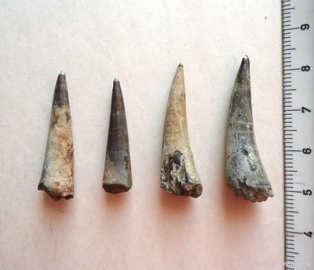 Зубы рыбы-сабли. Фото из личного архива Владимира Ордовского