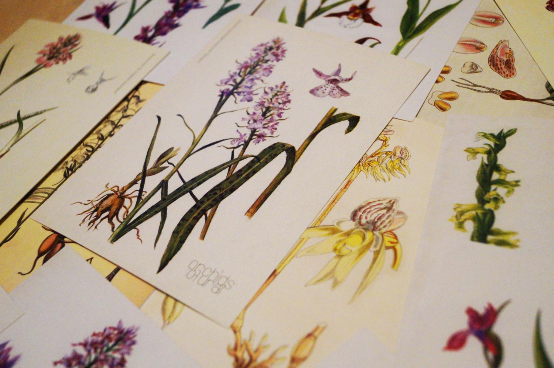 12 Орхидеи Урала. Набор открыток издательства TATLIN