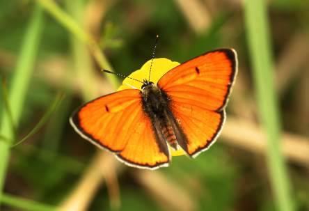 Бабочки Шашовских гор