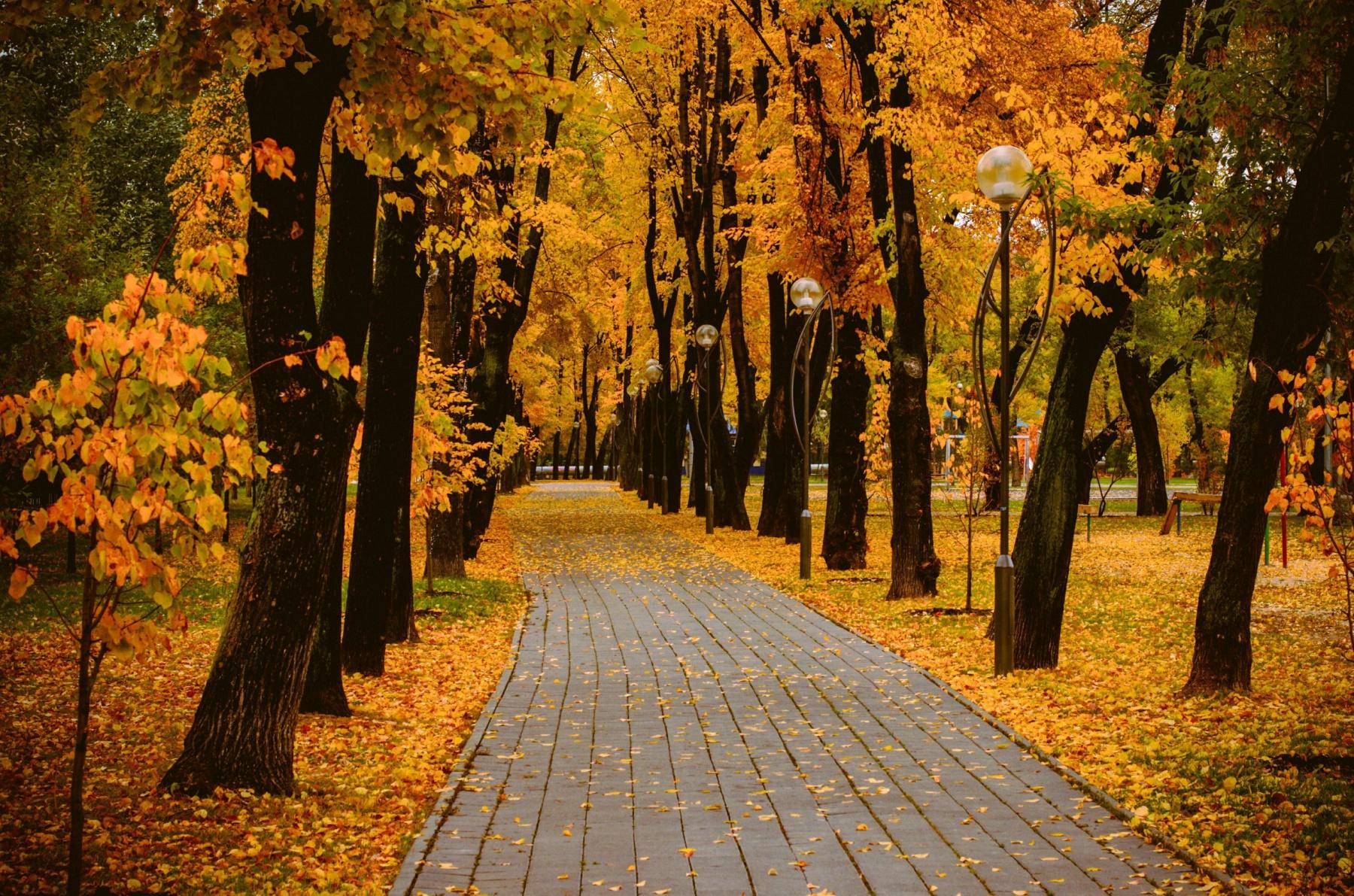 В объективе осень. Лучшее фото на осеннюю тему ищут в Тюмени