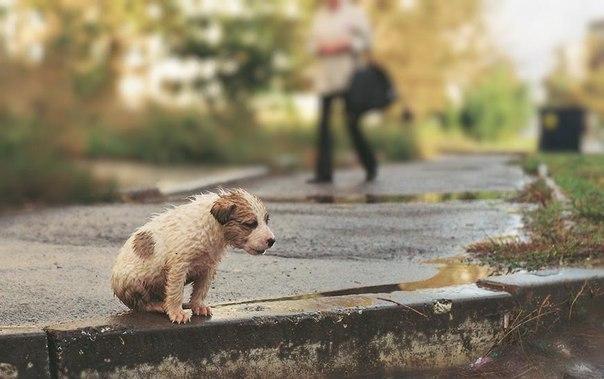 ВОмске наТеатральной площади прошел митинг взащиту прав животных