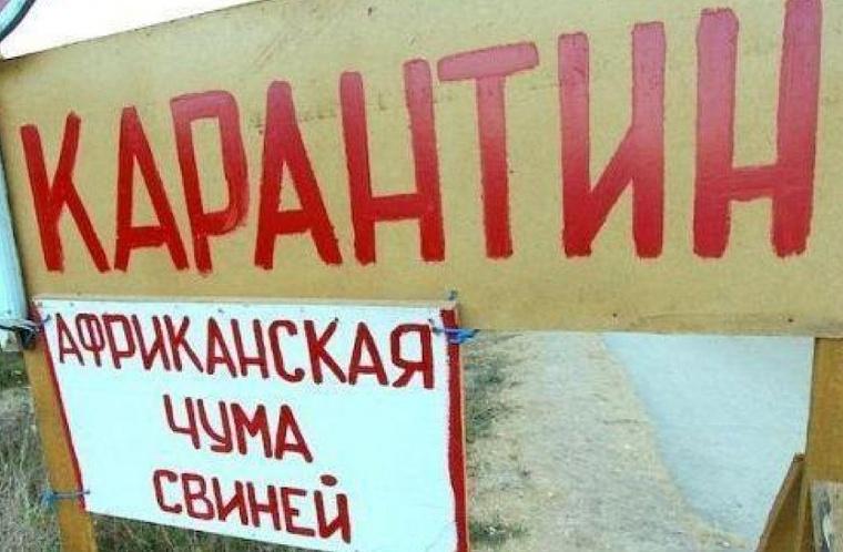 В Челябинской области ввели карантин из-за африканской чумы свиней