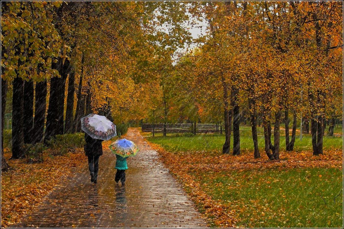 Завтра в Курской области прогнозируют дожди и до +11ºС